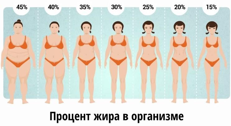 процент жира в организме